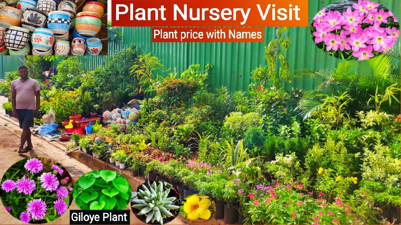 Plant Nursery Visit, Plant price with Names || Arohi Rose Nursery || Giloy plant, Herbal plants 🌿