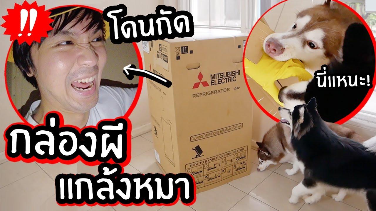 ปลอมเป็นกล่องผี กล่องขยับได้ แกล้งหมา! // โดนหมารุมกัด?