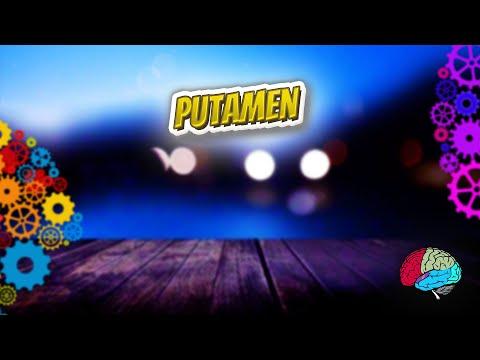 Putamen - Know It ALL 🔊✅
