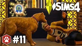 Spiel mit dem Tod | Let's Play Die Sims 4 Hunde & Katzen #11