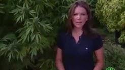 Marijuana Inc: Inside America's Pot Industry - CNBC
