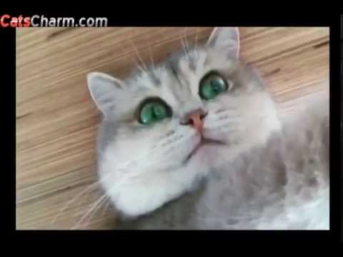 Beautiful Cats With Gorgeous Eyes Compilation 2016 - CatsCharm
