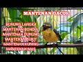 Masteran Langka Burung Mantenan Gacor Nembak Bongkar Isian Kicau Pidong  Mp3 - Mp4 Download