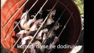 Repeat youtube video dimljenje šarana