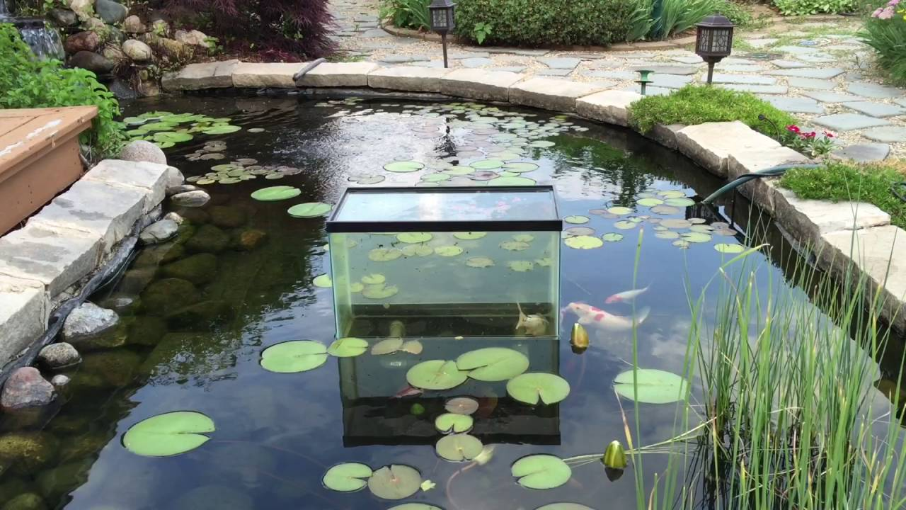 Above water aquarium youtube for Spring water for fish tank