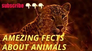 जानवरों के बारे में 19 रोचक तथ्य