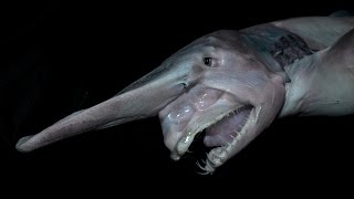 5 Creepiest Shark Species