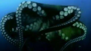 Aliens der Tiefsee - Ungelöste Phänomene - Tier Doku HD