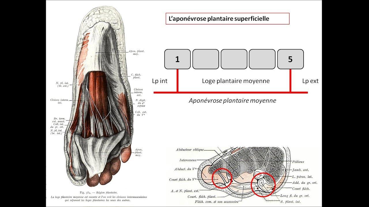 Gemütlich Anatomie Des Singens Ideen - Anatomie Ideen - finotti.info