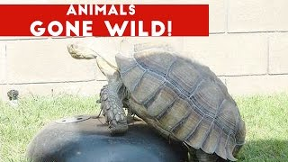 Funniest Animals Gone Wild Video Compilation December 2016 | Funny Pet Videos