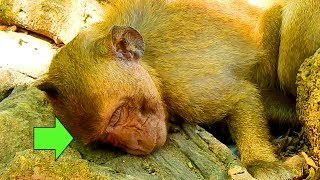 MG, Sweetpea Make Baby Donny In Such Situation, Sleepy & Lazy On Root|#Monkey Nightmare thumbnail