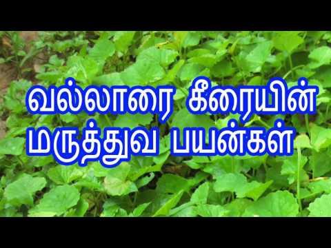 வல்லாரை கீரையின் மருத்துவ பயன்கள் vallarai keerai sambar in tamil | how to clean vallarai keerai