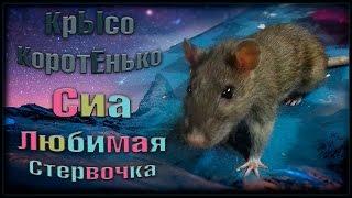 Пасючка Сиа. Любимая стервочка. ^_^ (Wild Rats | Дикие Крысы)