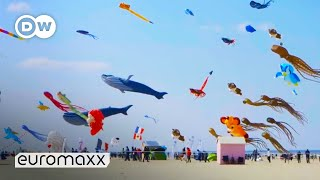 Biggest Kite Festival in Europe   Up in the Air in Berck-sur-Mer, France