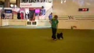 Robyn At Crufts 2008