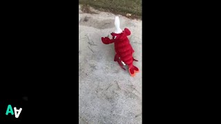 Happy Duck Goes for Wander in Cute Lobster Costume