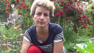 видео Нужно ли полностью обрезать листья клубники после созревания  ягод