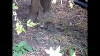 Идет дождь а кот сидит под деревом