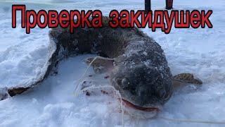 Зимняя рыбалка на налима Варвары порвали закидушки