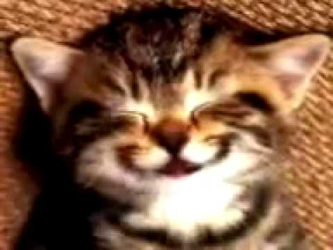 Kitten singing Happy Birthday Song
