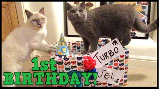A BRITISH SHORTHAIR BIRTHDAY! | CHRIS & EVE