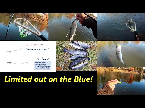How We Fished The Blue River Saturday... Limited Out! #flyfishing