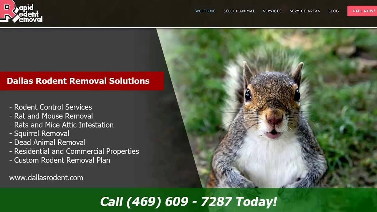 McKinney Rapid Rodent Removal | (972)-435-9000 — Rapid
