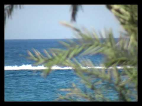 Aussaat von Palmen - Erste Wurzeln/Keime sichtbar - Teil 3 von YouTube · Dauer:  2 Minuten 43 Sekunden