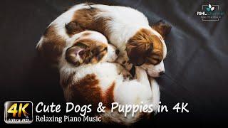 Dogs Video in 4K  Cute Dogs & Puppies in 4K Ultra HD