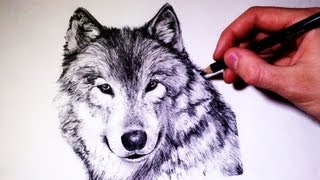 How to draw a realistic Wolf - (Time Lapse)