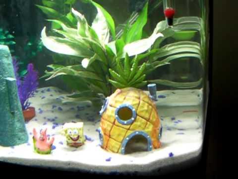 12g Aquarium With Spongebob Theme Youtube
