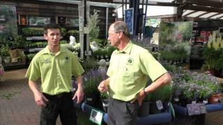 July Gardening Tips @ The Old Railway Line Garden Centre