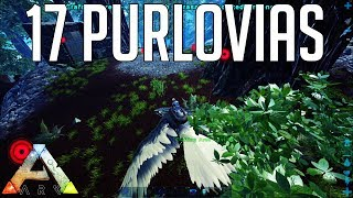 The BIGGEST Purlovia Find! : Ark: Survial Evolved Small Tribe Servers