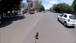 Жуткая погоня за собакой по оживленной трассе