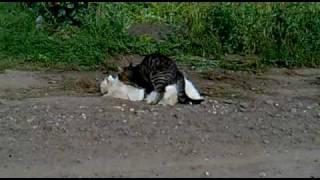Кот хорошенько засадил киске