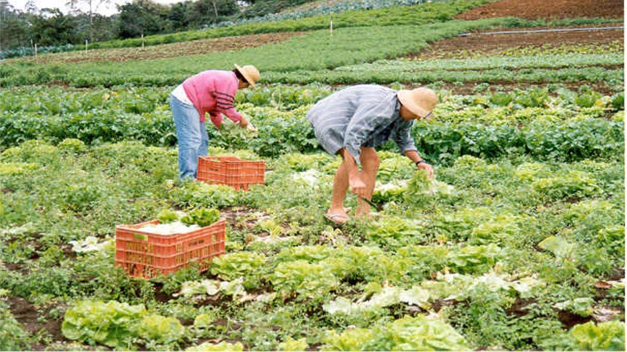 Cultivo org nico de hortali as aduba o org nica for Sustrato para mesa de cultivo