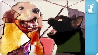 Gotye Dog Parody - Somebody That I Used To Know