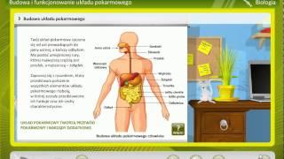 Biologia Układ pokarmowy   wiedza