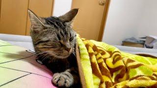 熱中症が心配になったので猫を起こしに行った結果