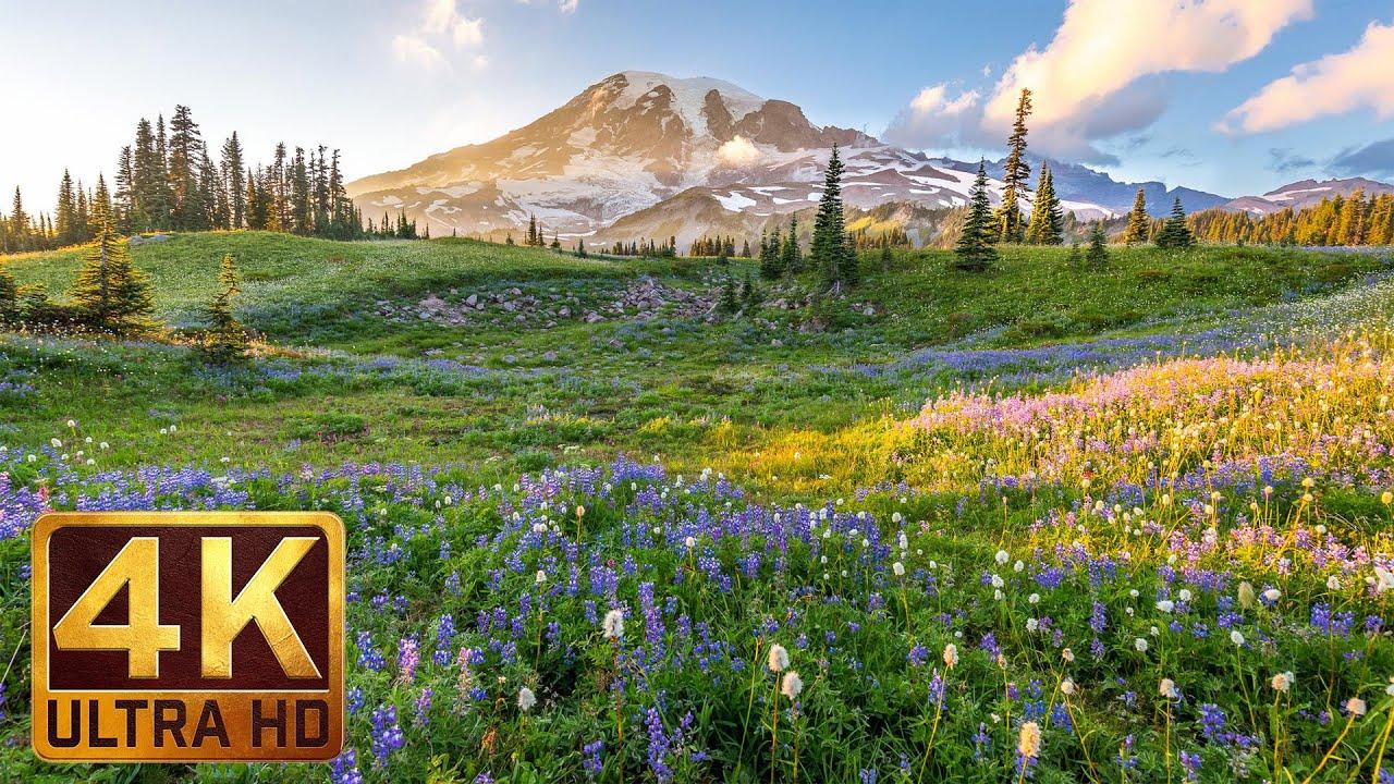 (3 hours) 4K UHD Relaxation video: Mount Rainier National Park Washington State, Nature Sounds - 1
