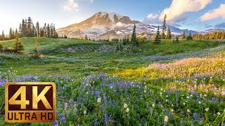 (3 hours) 4K UHD Relaxation video: Mount Rainier National Park Washington State, Nature Sounds - 1 thumbnail