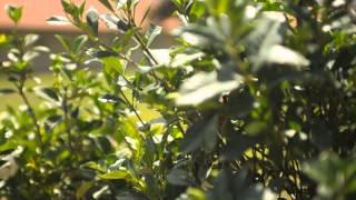 How to Grow Gardenias in a Greenhouse : Garden Savvy