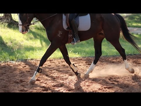 NEW HORSE (Vet check, first ride & Q&A)