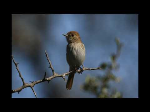 Wildlife Paraguay