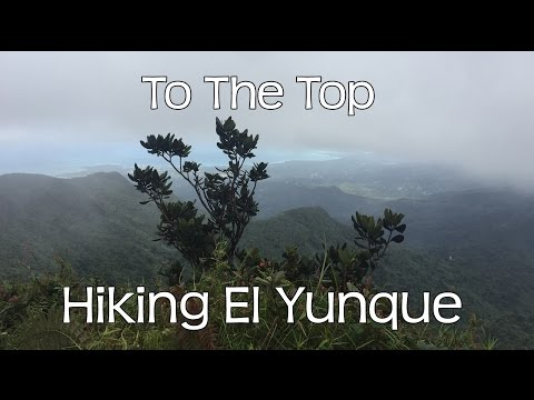 Hiking El Yunque To The Top - Rainforest Puerto Rico Island Walkers Rubio Tours John Druitt