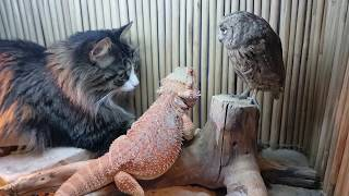 An owl, a lizard and a cat enjoy some magic power, with cockroaches on the side.