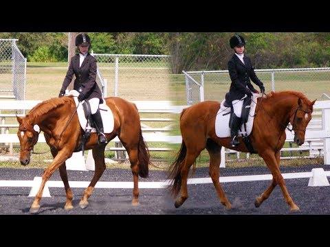 OUR LAST HORSE SHOW!
