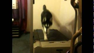 Rochester Ny Dogs - Dog Training, Tricks & Obedience - Siberian Husky