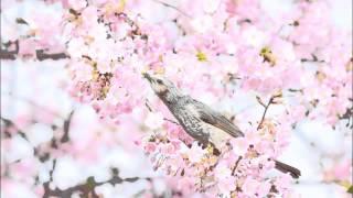 グローフェ: ミシシッピ組曲第4曲:マルディ・グラ(懺悔火曜日)[ナクソ...