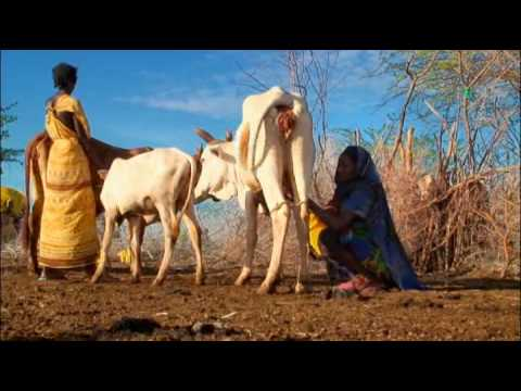 Climate, Food and Developing-Country Livestock Farmers
